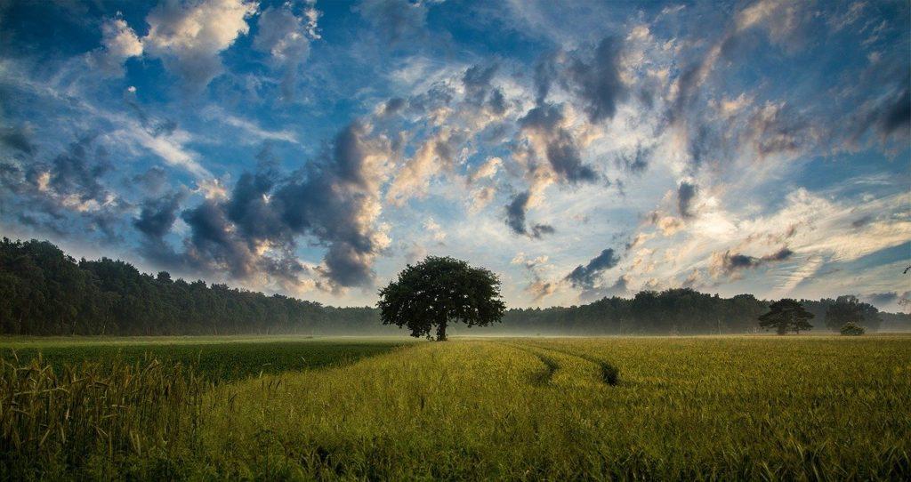 árvore no campo descritivo