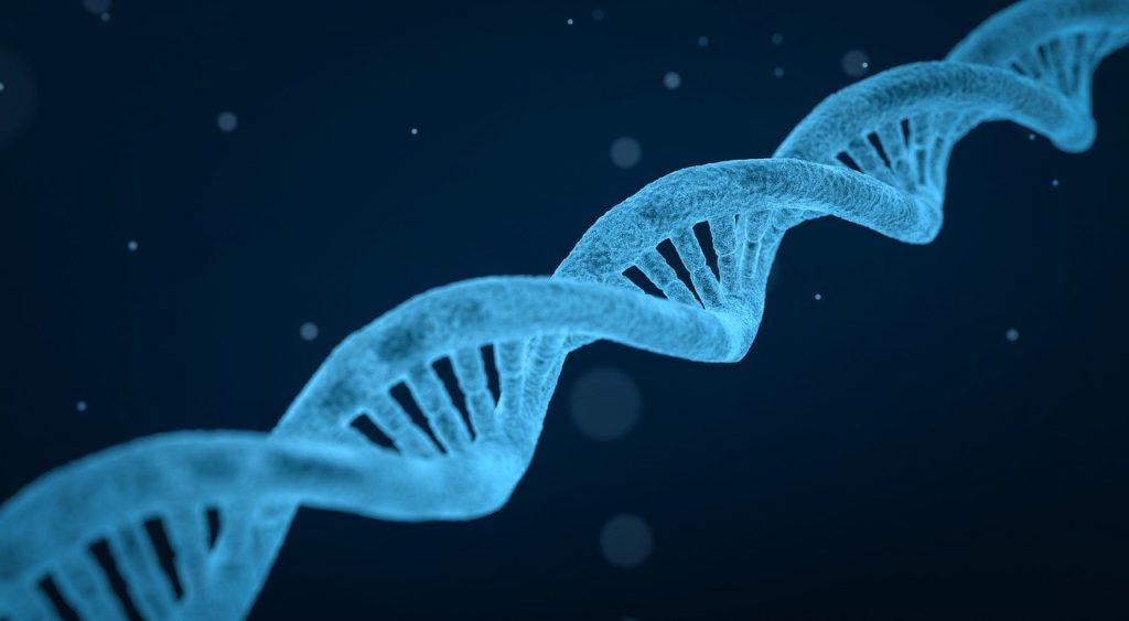 DNA Genética Leis de mendel