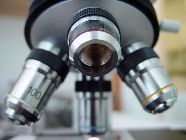 Embriogênese: o que é e como funciona?