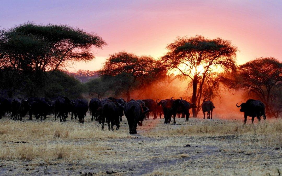 África: tudo sobre esse continente incrível!