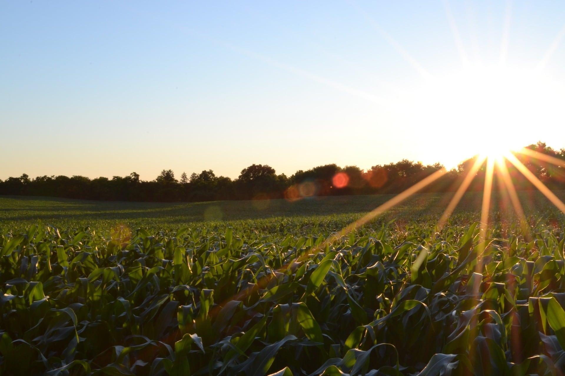 Agropecuária: o que é, tipos de sistemas e mais!