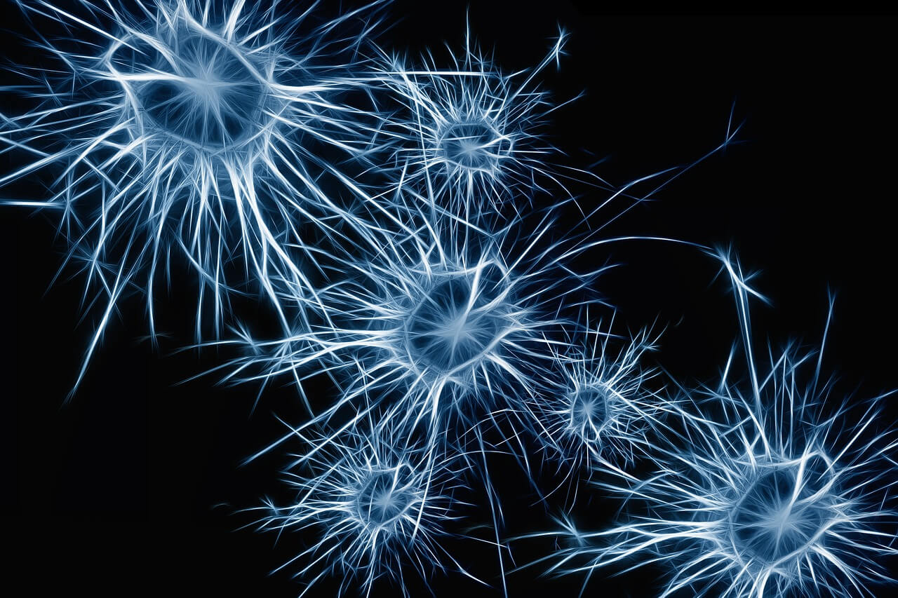 Anencefalia: o que é, causas e mais!