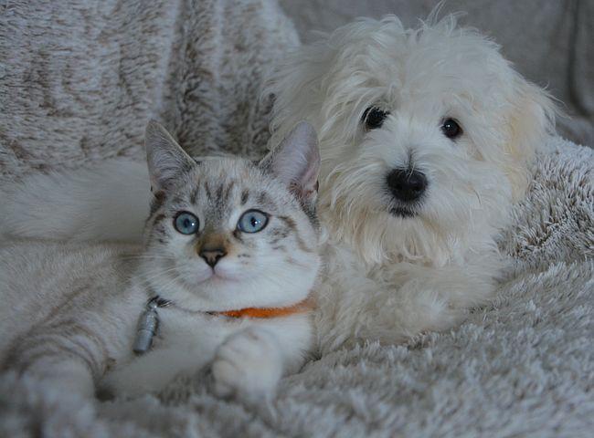 gato e cachorro proteção animais