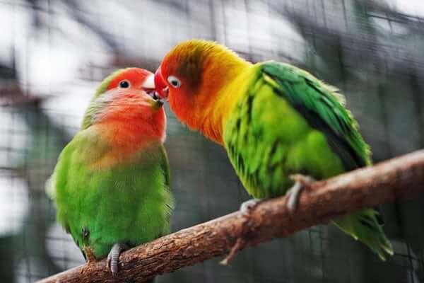 Aves: o que são, classificação e mais!