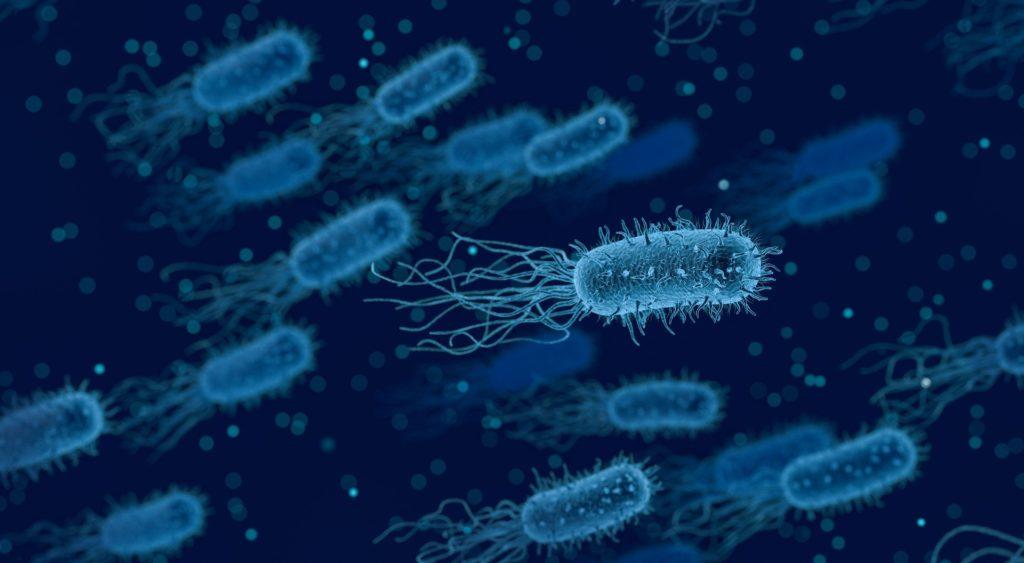 diversas bactérias