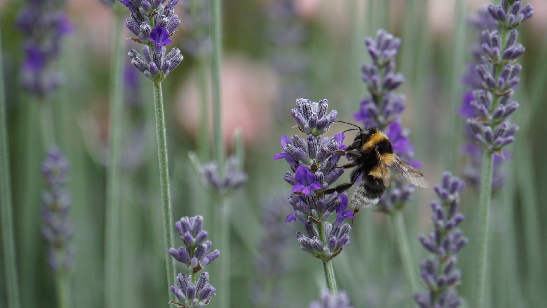 Biologia: Como a biodiversidade pode cair no Enem?