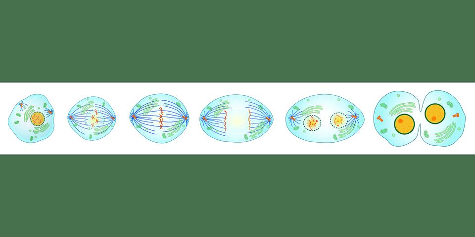 células citologia