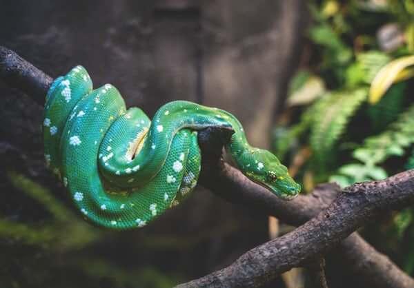 Cobra: entenda mais sobre esse animal!