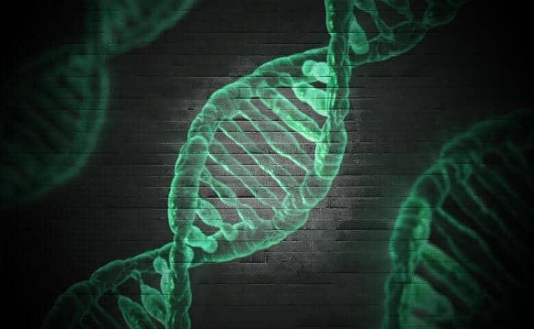 Cromossomos: o que são, tipos e muito mais!