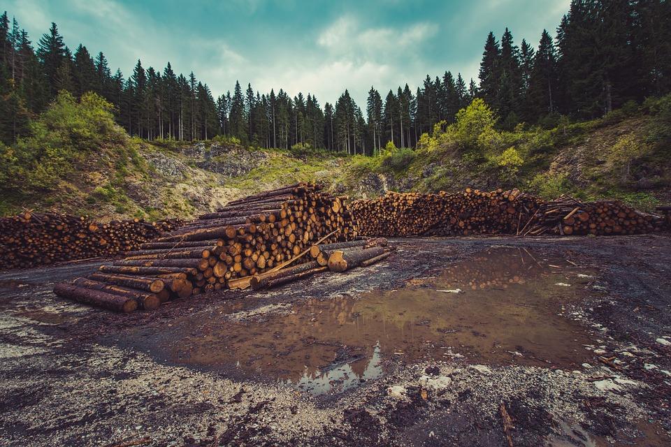 desmatamento brasil