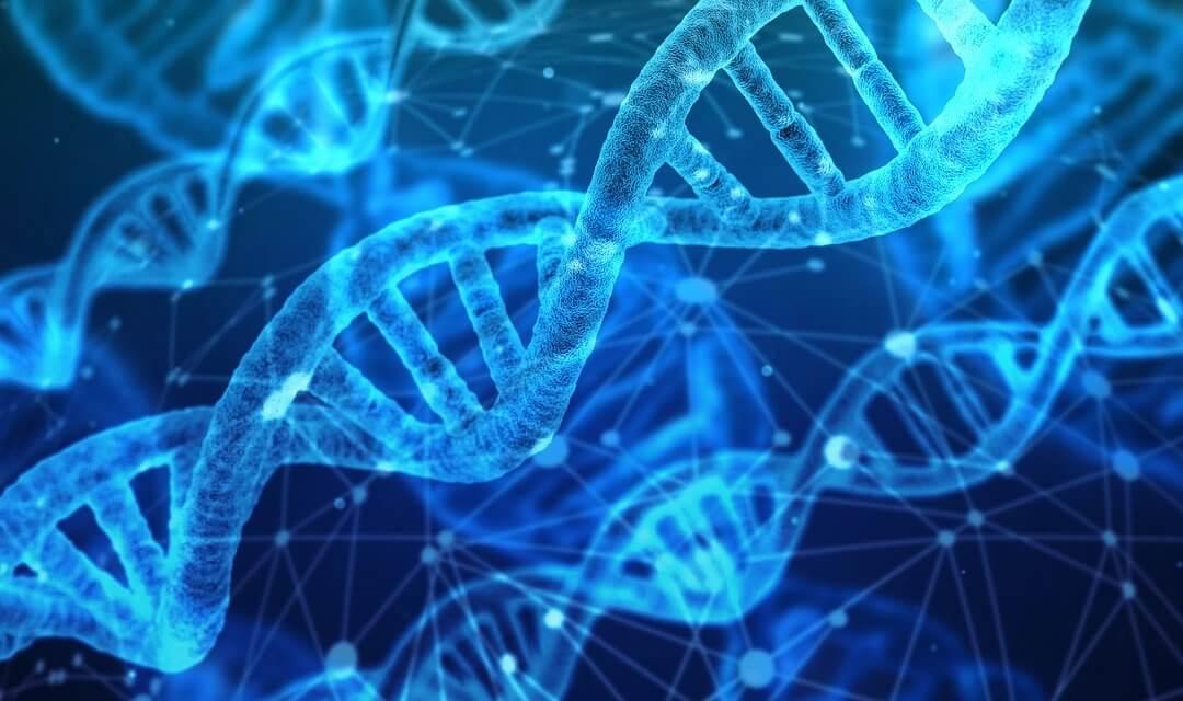 DNA e RNA: o que é, função e mais!