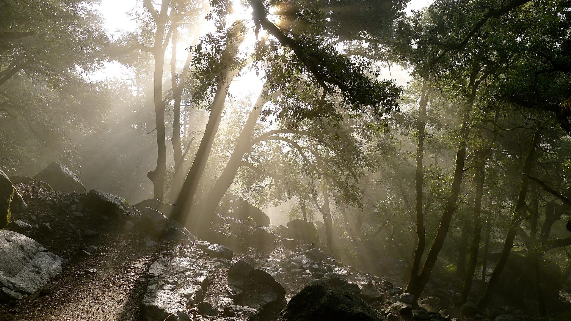 Biologia: como a Ecologia pode cair no Enem?