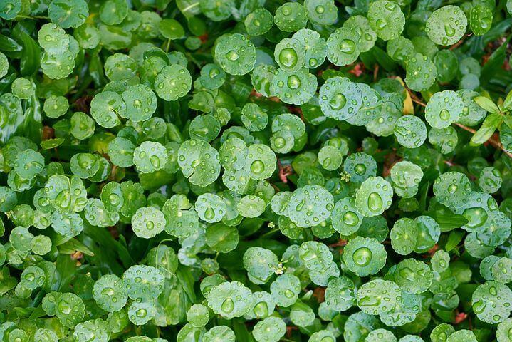 plantas fotossíntese
