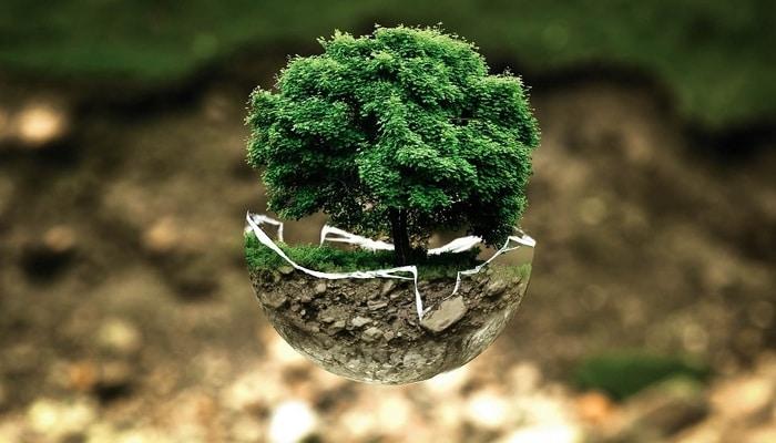 Sucessão ecológica: o que é, tipos e exercícios!