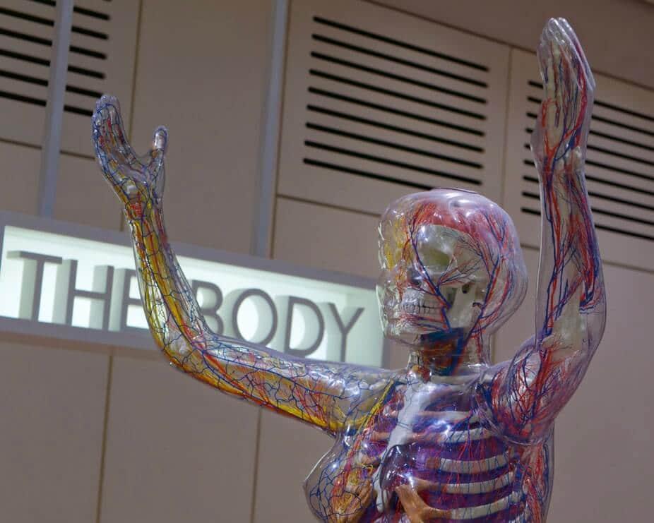 Linfonodos: o que é, função e câncer!