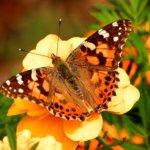 borboleta metamorfose