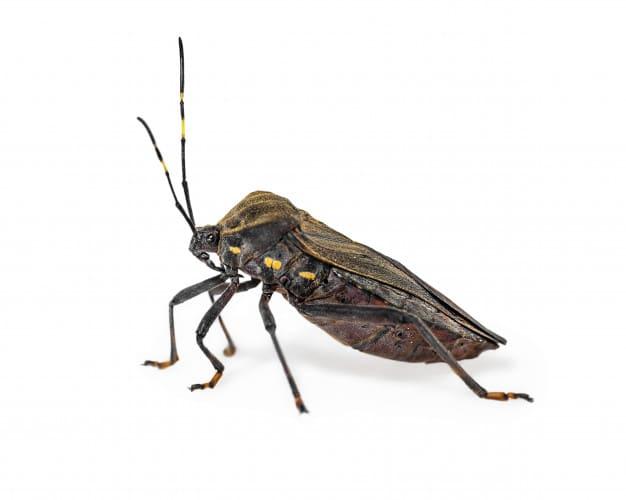 Doença de Chagas: o que é, sintomas, causas e mais!