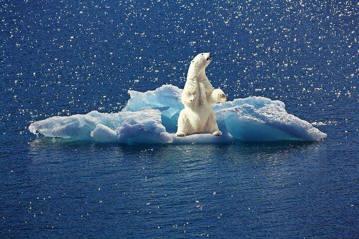 urso polar efeito estufa