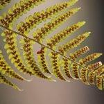 planta reino plantae