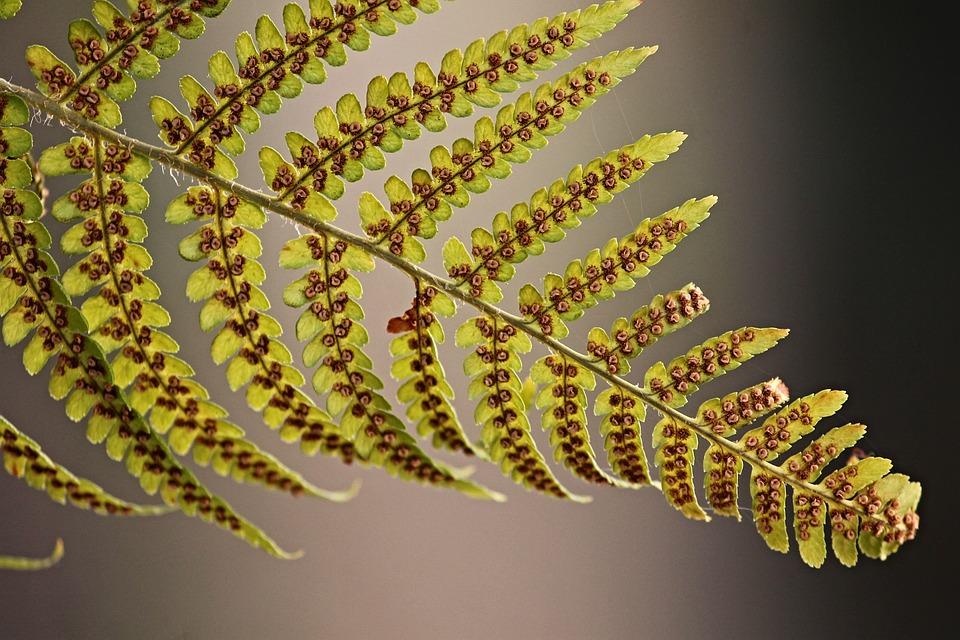 Reino Plantae: principais características e classificações