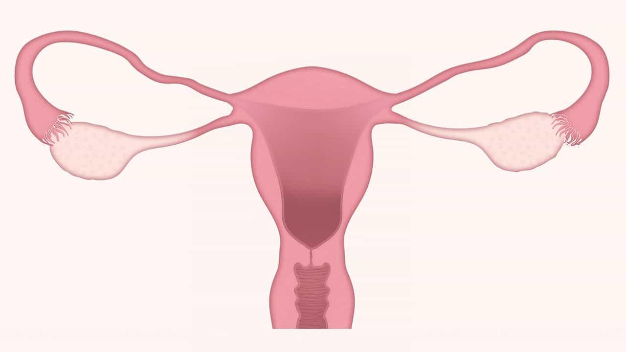 Sistema genital feminino: órgãos, anatomia e mais!
